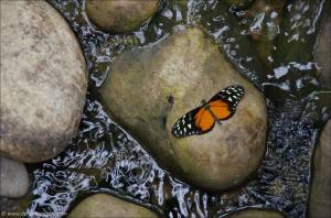 ©2013-08-31 Jardin des Papillons Grevenmacher_29