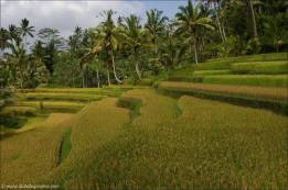 ©Zeit für Bali
