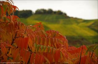 ©Indian Summer an der Mosel-1