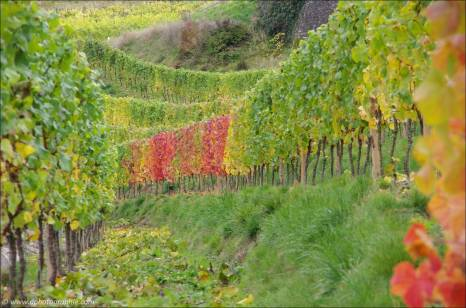 ©Indian Summer an der Mosel-2