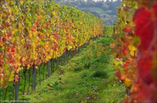 ©Indian Summer an der Mosel-4