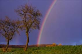 ©Ein Regenbogen nur für mich!_45