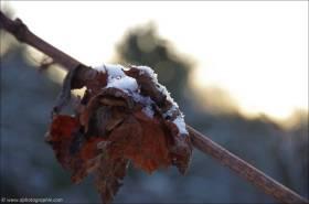 ©Leise rieselt der erste Schnee