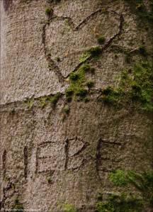 ©Stark wie ein Baum