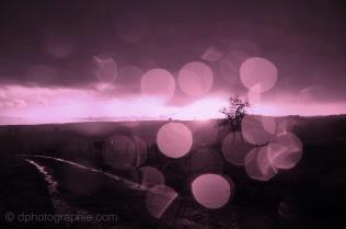 (c) Purple Rain